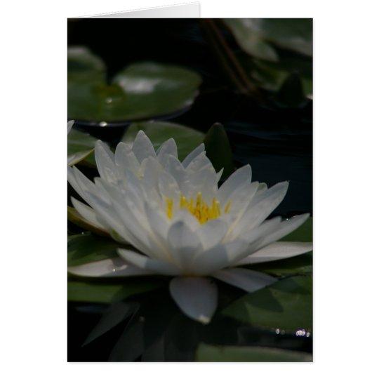 White Lotus Waterlily Card