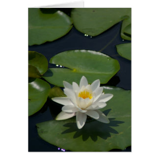 White Lotus Waterlily Card