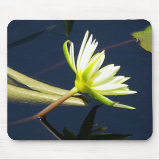 white lotus waterlily mouse pad