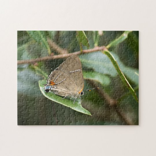 White-M Hairstreak Resting on a Leaf Jigsaw Puzzle