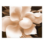 White Magnolia Flower Sepia Black Background Photo