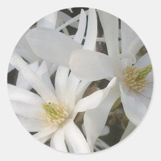 White Magnolia Sticker