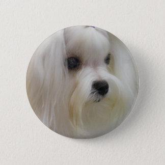 White Maltese 2 Inch Round Button