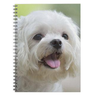 White Maltese Dog Notebook