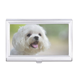 White maltese dog sticking out tongue business card holder