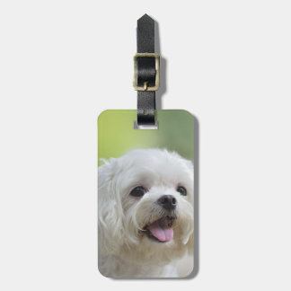 White maltese dog sticking out tongue luggage tag