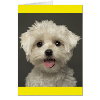 White Maltese Puppy Dog Blank Note Card