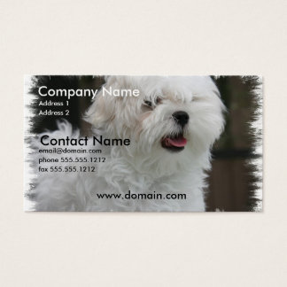 White Maltese Puppy Dog Business Card
