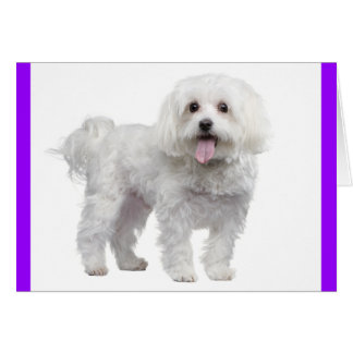 White Maltese Puppy Dog: Hello, Miss You, Love Card