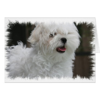 White Maltese Puppy Greeting Card