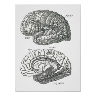 White Matter Tracts of the Brain Poster
