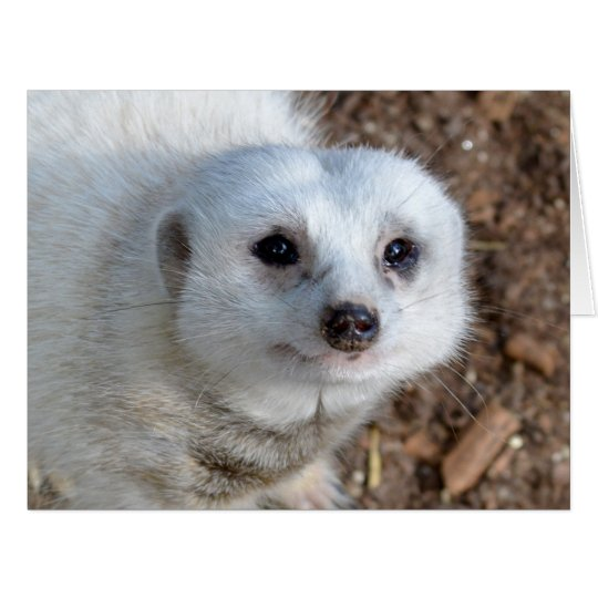 White Meerkat Face,_Big_Birthday Greeting Card
