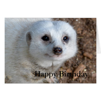 White Meerkat Face,_Birthday Greeting Card