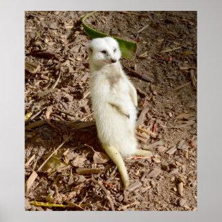 White Meerkat Standing In The Sun, Poster