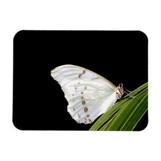 White morpho butterfly on leaf magnet