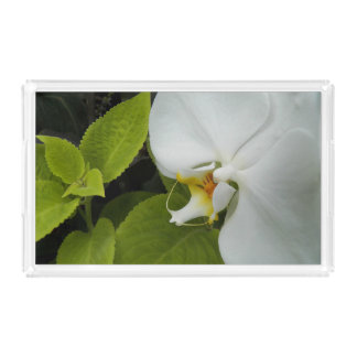 White Moth Orchid Floral Acrylic Tray