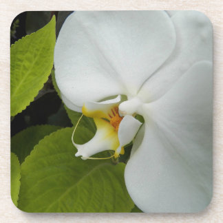 White Moth Orchid Floral Coaster Set