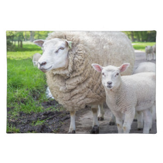 White mother sheep and lamb standing on road place mats