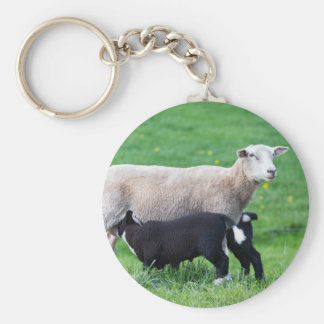 White mother sheep with two drinking black lambs basic round button keychain
