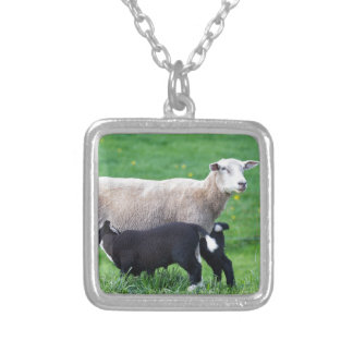 White mother sheep with two drinking black lambs silver plated necklace