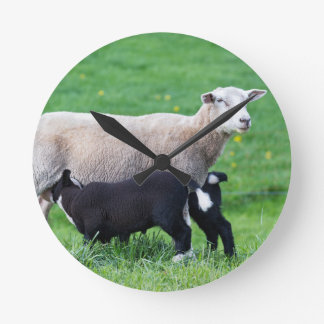 White mother sheep with two drinking black lambs wallclock