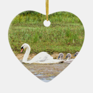 White mother swan swimming in line with cygnets ceramic ornament