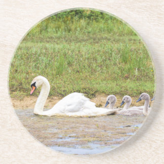 White mother swan swimming in line with cygnets drink coasters