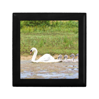 White mother swan swimming in line with cygnets gift box