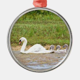 White mother swan swimming in line with cygnets Silver-Colored round ornament