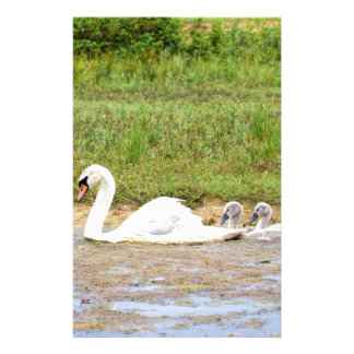 White mother swan swimming in line with cygnets stationery