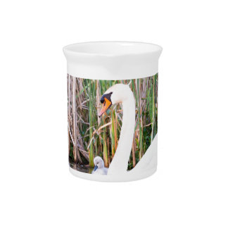 White mother swan swimming with chicks beverage pitcher