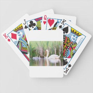 White mother swan swimming with chicks bicycle playing cards