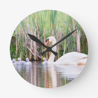 White mother swan swimming with chicks clock