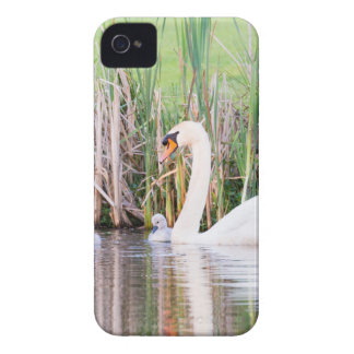 White mother swan swimming with chicks iPhone 4 Case-Mate cases