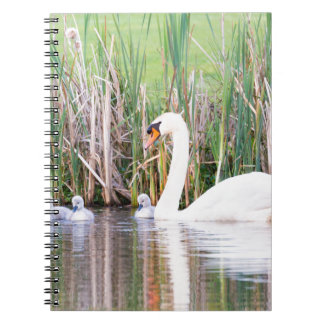 White mother swan swimming with chicks notebooks