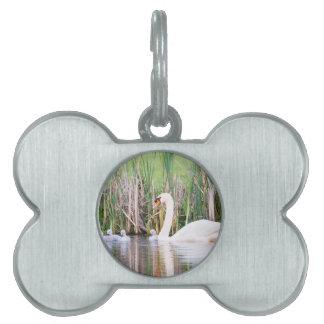 White mother swan swimming with chicks pet tag