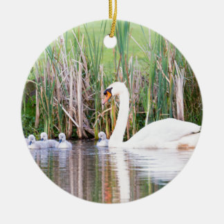 White mother swan swimming with chicks round ceramic ornament
