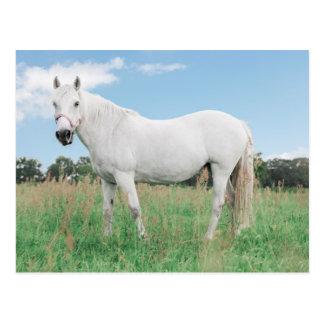 white mould on a meadow postcard