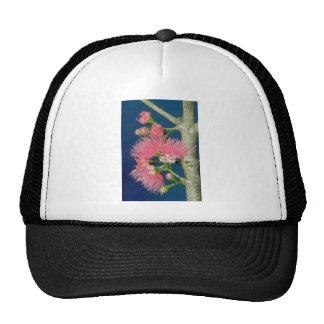White Mountain apple (Eugenia malaccensis) flowers Mesh Hats