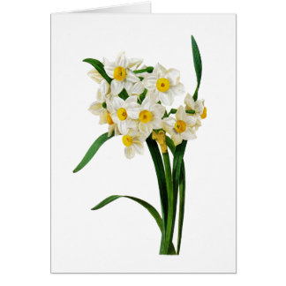 White Narcissus by Pierre-Joseph Redoute Card