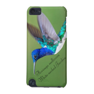 White-necked Jacobin iPod Touch (5th Generation) Cases