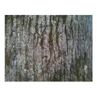 White Oak Tree Bark Postcard