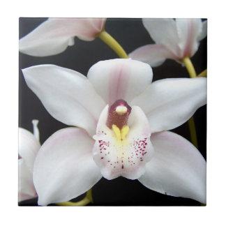 White Orchid Flower Tiles