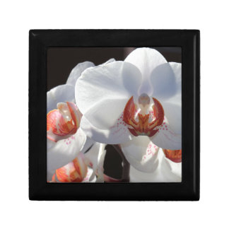 White Orchid Gift Box