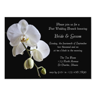 "White Orchid on Black Post Wedding Brunch 5"" X 7"" Invitation Card"