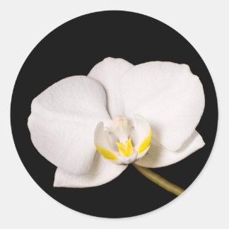 White Orchid On Black Round Sticker