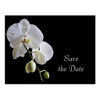 White Orchid on Black Wedding Save the Date Postcard