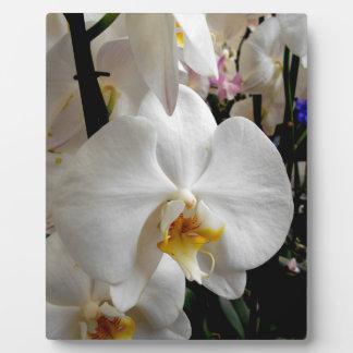 White Orchid Plaque