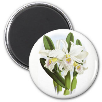 White Orchid Refrigerator Magnet