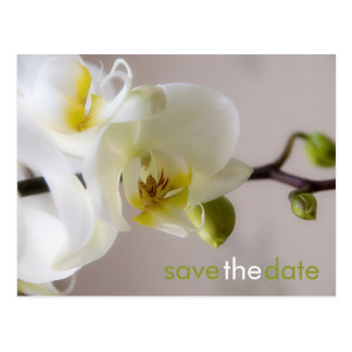 White Orchid • Save the Date Postcard
